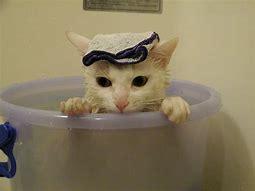 ネコが風呂に入ってる