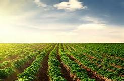 オーガニック食品を作る畑