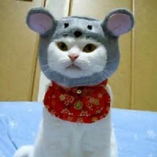 ネズミの形をした帽子をかぶるネコ