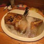 風呂に入ってる犬